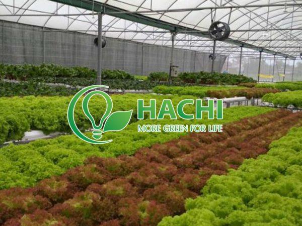 doi-tac-Hachi