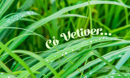 Co-vetiver