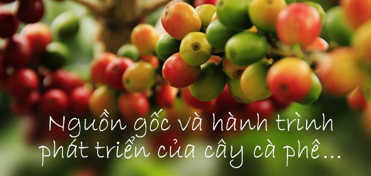 Lich-su-cay-ca-phe